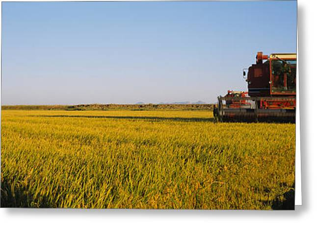 Rice Paddy Greeting Cards - Combine In A Rice Field, Glenn County Greeting Card by Panoramic Images