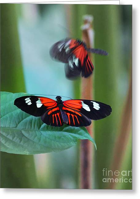 Tn Greeting Cards - Come Fly With Me Greeting Card by TN Fairey