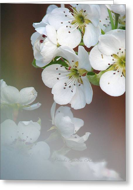 Fruit Tree Art Greeting Cards - Come Hither Pear Blossoms Greeting Card by Brooks Garten Hauschild