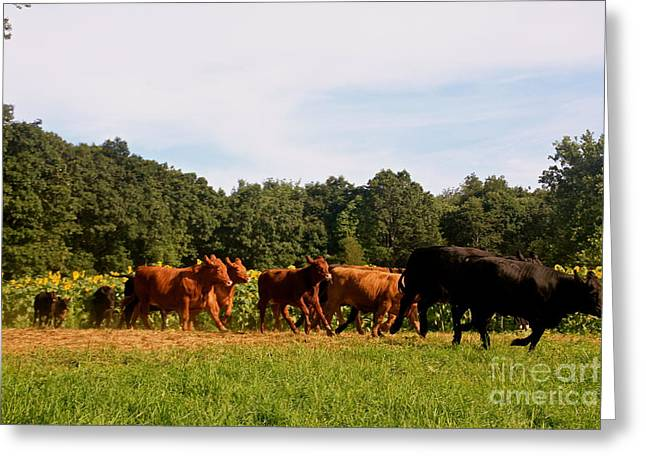 Buttonwood Farm Greeting Cards - Come Running Greeting Card by Dorothy Drobney