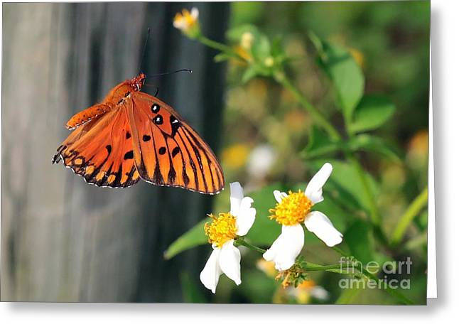 Butterfly In Flight Greeting Cards - Come to Me Greeting Card by Carol Groenen