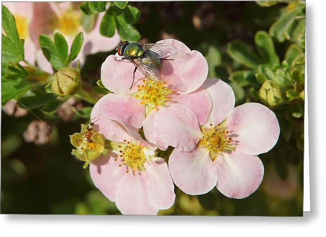 Diptera Greeting Cards - Come to the ugly bug ball Greeting Card by Ernie Echols