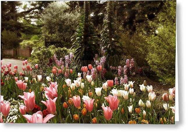 Tulip Garden Greeting Cards - Come What May Greeting Card by Jessica Jenney