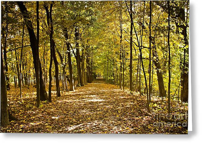Indiana Autumn Greeting Cards - Come with us Greeting Card by Lynne Dohner