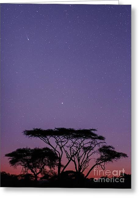 21st Greeting Cards - Comet Ison, November 2013 Greeting Card by Babak Tafreshi, Twan