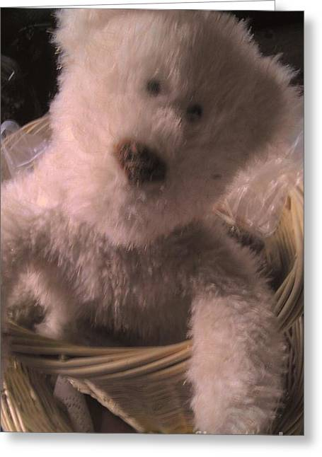 Comfort  Teddy Zone Greeting Card by Marlene Williams