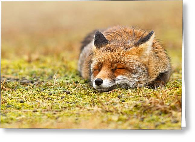 Sleepy Greeting Cards - Comfortably Fox Greeting Card by Roeselien Raimond