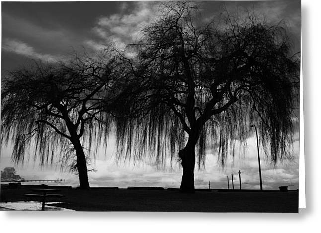 Lack And White Greeting Cards - Comforts Of Rain Greeting Card by Jerry Cordeiro
