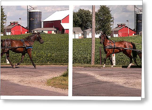 Amish Greeting Cards - Coming and Going Greeting Card by David Bearden