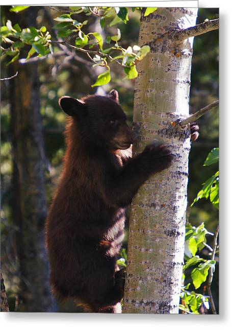 Climb Tree Greeting Cards - Coming Down Greeting Card by Mark Kiver