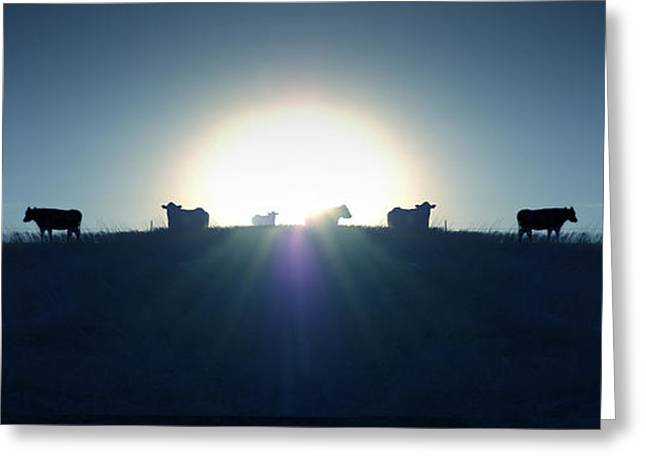 Steer Greeting Cards - Coming Home Greeting Card by Mike McGlothlen