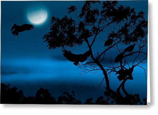 Vulture Silhouettes Greeting Cards - Coming Home To Roost Square Greeting Card by Bill  Wakeley