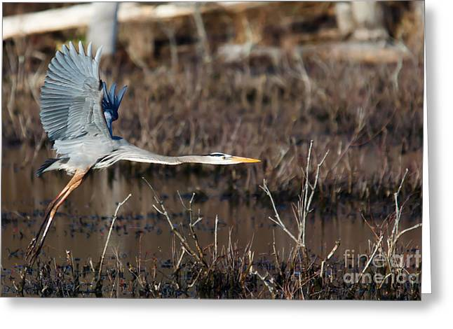 Art For Sanctuaries Greeting Cards - Coming in for a Landing Greeting Card by Mary Lou Chmura