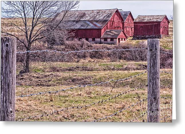 Pastureland Greeting Cards - Coming Into Spring  Greeting Card by Mary Lou Chmura