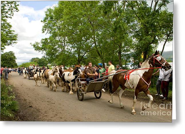Horse And Cart Greeting Cards - Coming Through Greeting Card by Liz  Alderdice