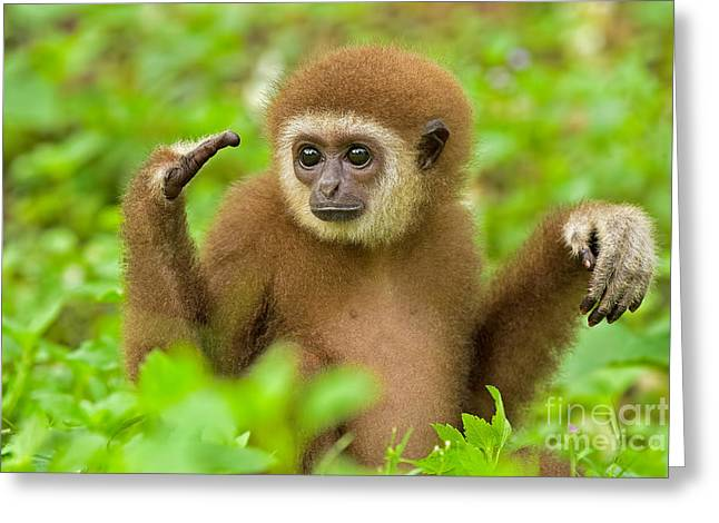Compelling Greeting Cards - Coming To Terms Greeting Card by Ashley Vincent