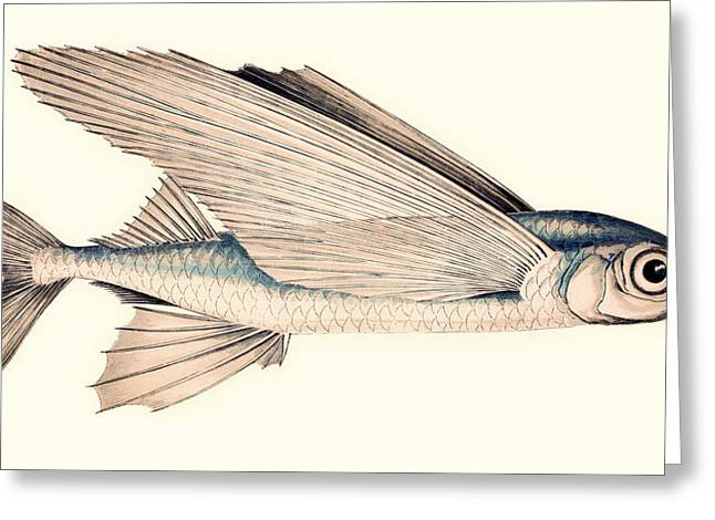 Flying Fish Greeting Cards - Common Atlantic Flying Fish Greeting Card by Mountain Dreams