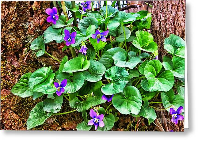 Violet Blue Greeting Cards - Common Blue Violet  Greeting Card by Thomas R Fletcher