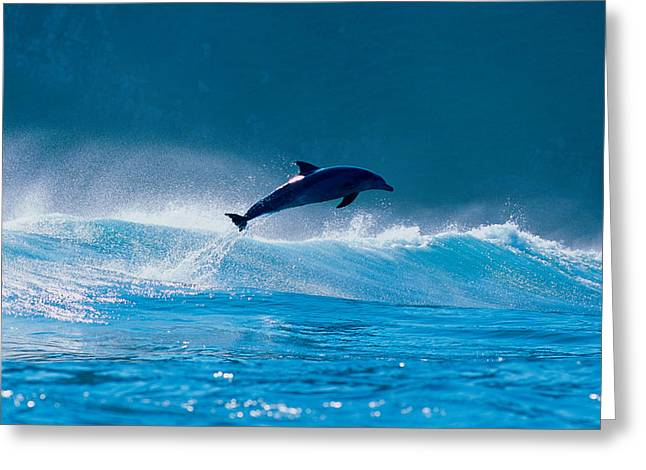 Breaching Greeting Cards - Common Dolphin Breaching In The Sea Greeting Card by Panoramic Images