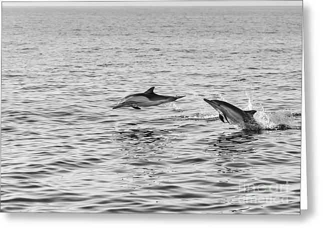 Long Jump Greeting Cards - Common Dolphins leaping. Greeting Card by Jamie Pham