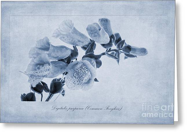 Pollination Greeting Cards - Common Foxglove Cyanotype Greeting Card by John Edwards