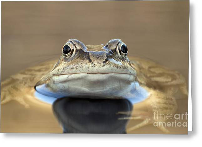 Common Frog In A Pond Greeting Card by Simon Booth