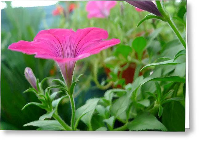 Branch Greeting Cards - Common Garden Petunia Flower Greeting Card by Lanjee Chee