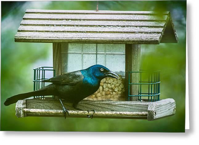 Onyonet Photo Studios Greeting Cards - Common Grackle on Bird Feeder Greeting Card by  Onyonet  Photo Studios