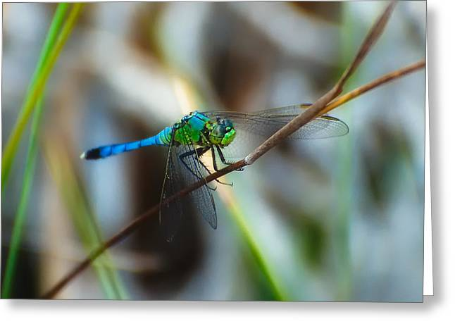 Junius Greeting Cards - Common Green Darner Greeting Card by Rich Leighton