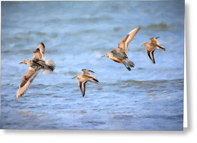 Wade Mixed Media Greeting Cards - Common Sandpiper Greeting Card by Toppart Sweden