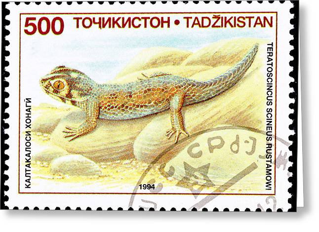 Gecko Illustration Greeting Cards - Common Wonder Gecko Lizard Greeting Card by Jim Pruitt