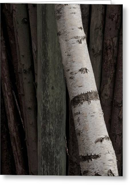 Birch Tree Greeting Cards - Communication Gap Greeting Card by Odd Jeppesen