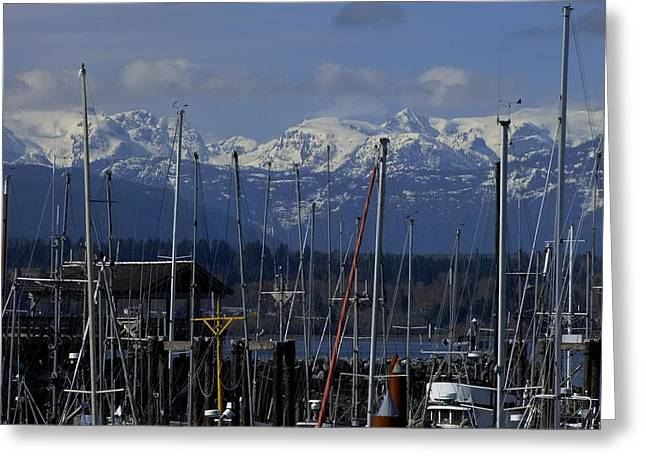 Masts Greeting Cards - Comox Bay Marina Greeting Card by Will LaVigne