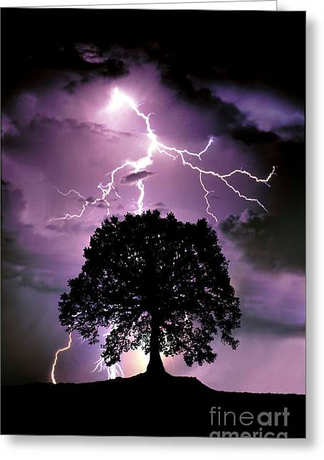 Lightning Bolts Greeting Cards - Composite Of Lightning Hitting A Tree Greeting Card by Mike Agliolo