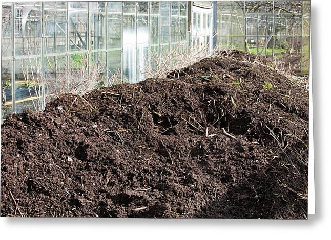 Compost Heap Greeting Card by Ashley Cooper