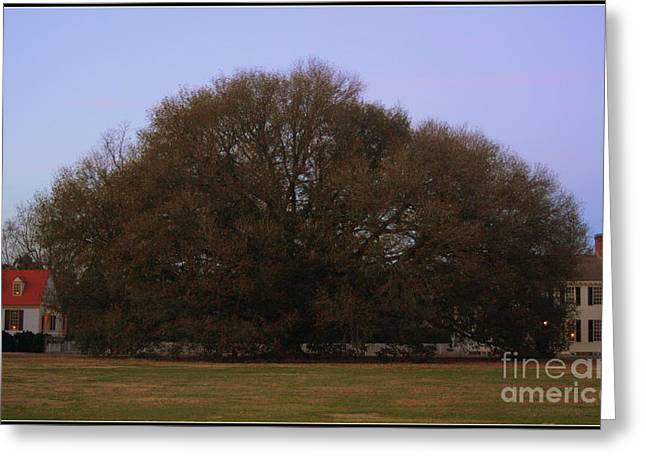 Historic Site Greeting Cards - Compton Oak Tree Greeting Card by Patti Whitten
