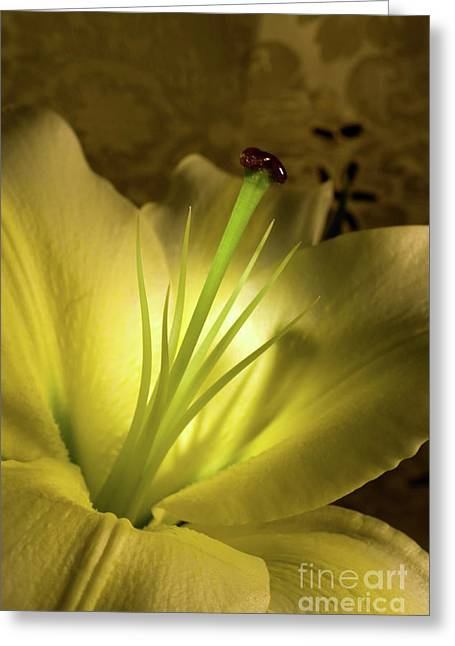 Linda Matlow Greeting Cards - Conca Dor Lily Greeting Card by Linda Matlow