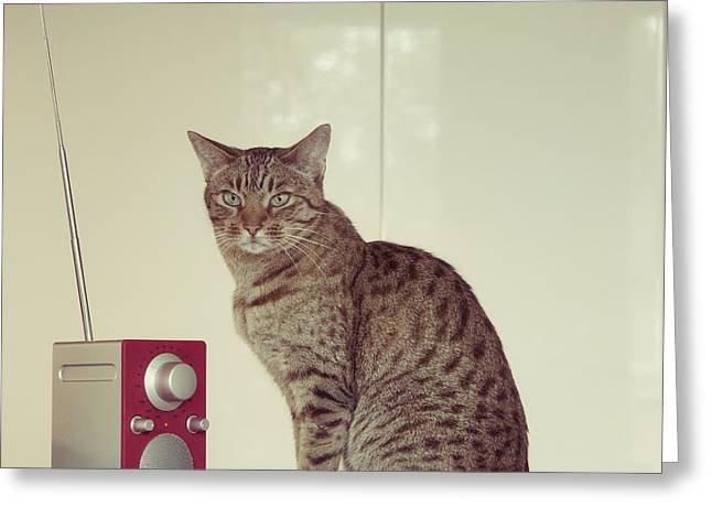Cat Breeds Portraits Greeting Cards - Concentrated Listener Greeting Card by Ari Salmela