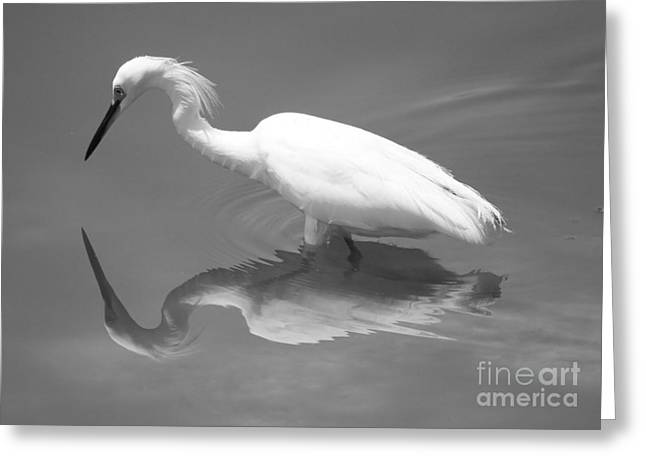 Egret Greeting Cards - Concentration Greeting Card by Carol Groenen