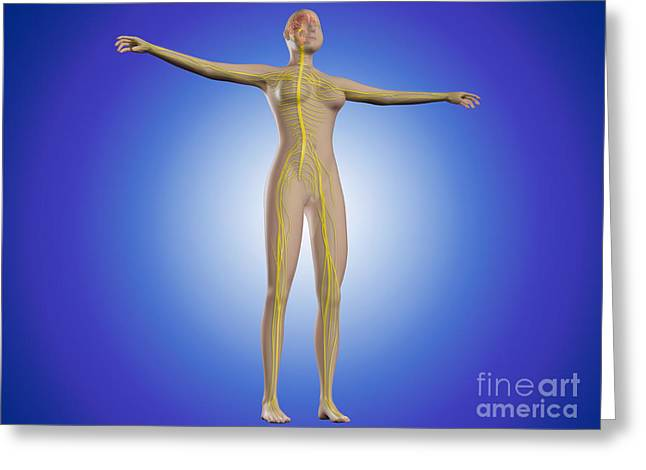 Full Body Digital Art Greeting Cards - Conceptual Image Of Female Nervous Greeting Card by Stocktrek Images