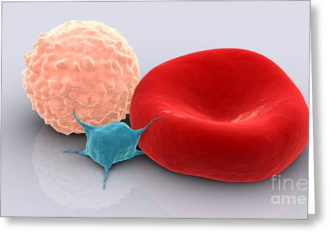 Red Cells Greeting Cards - Conceptual Image Of Platelet, Red Blood Greeting Card by Stocktrek Images