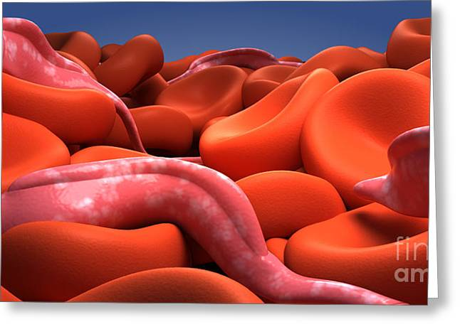 Unicellular Greeting Cards - Conceptual Image Of Trypanosoma Greeting Card by Stocktrek Images