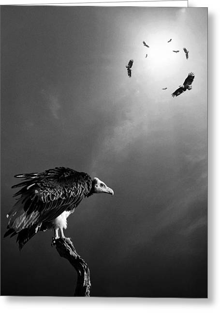 Anticipation Greeting Cards - Conceptual - Vultures awaiting Greeting Card by Johan Swanepoel