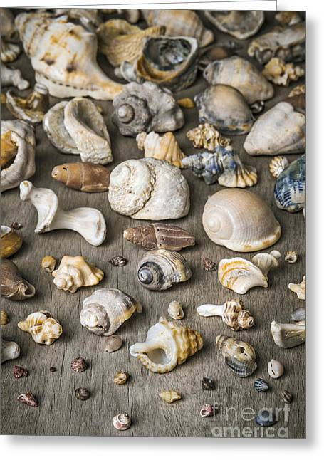 Shell Texture Greeting Cards - Conch Background Greeting Card by Carlos Caetano