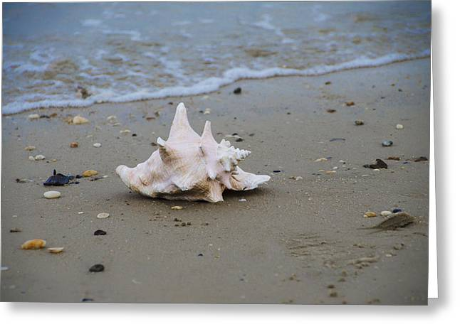 On The Beach Digital Greeting Cards - Conch on the Beach Greeting Card by Bill Cannon