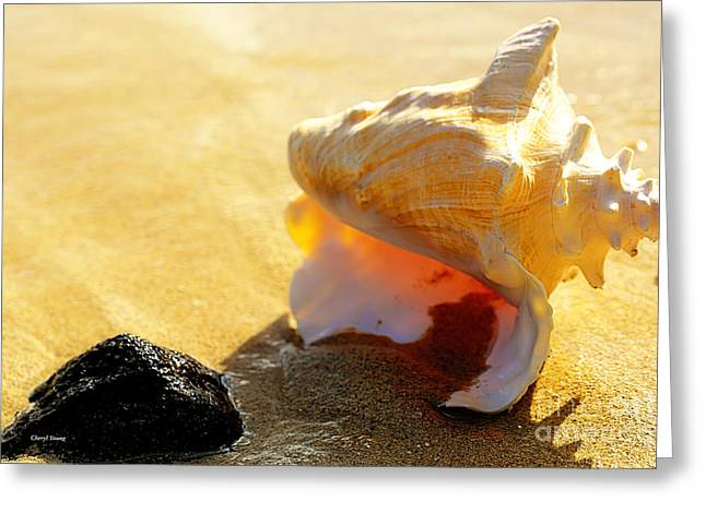 Conch Shell 2 Greeting Card by Cheryl Young