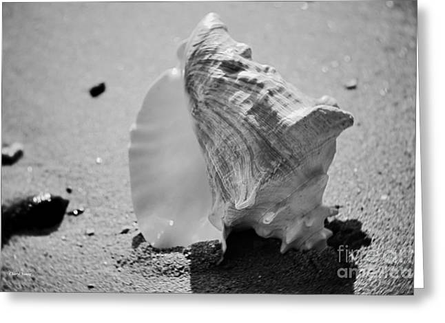 Underwater Diva Greeting Cards - Conch Shell Greeting Card by Cheryl Young