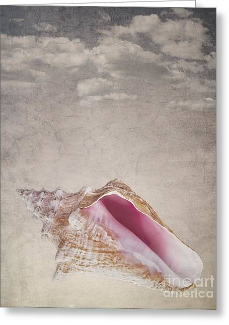Conch Shell On Vintage Background Greeting Card by Jane Rix