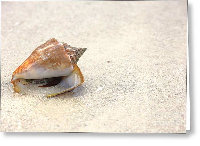 Sophie Vigneault Greeting Cards - Conch Greeting Card by Sophie Vigneault