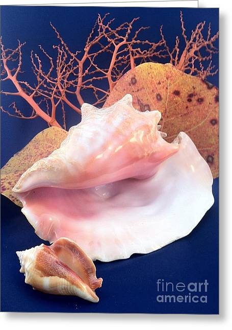 Blue Grapes Greeting Cards - Conch Still Life Greeting Card by Barbie Corbett-Newmin